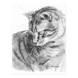 Grey Tabby Cat Sketched in Charcoal Postcard