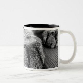 Grey Tabby Kitty Two-Tone Coffee Mug