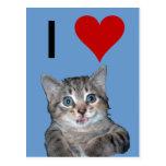 Grey Tiger Kitten with Blue Eyes Postcard