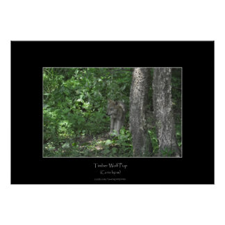 Grey Timber Wolf Pup & Forest Photo Print
