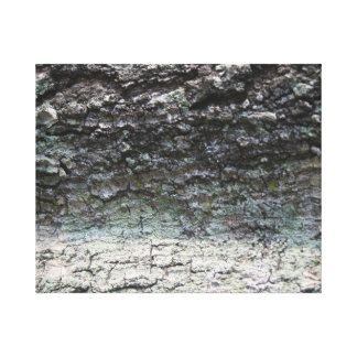 Grey tree bark close up fading stretched canvas prints