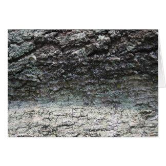 Grey tree bark close up fading card