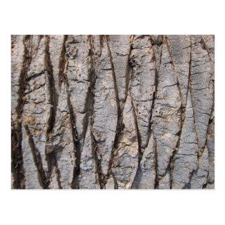 Grey tree bark texture postcard