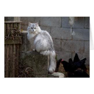 Grey-White Angora Cat Card