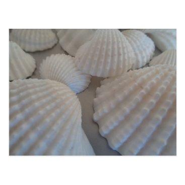 Beach Themed Grey White, Seashells, Sea Shell Summer Beach Love Postcard