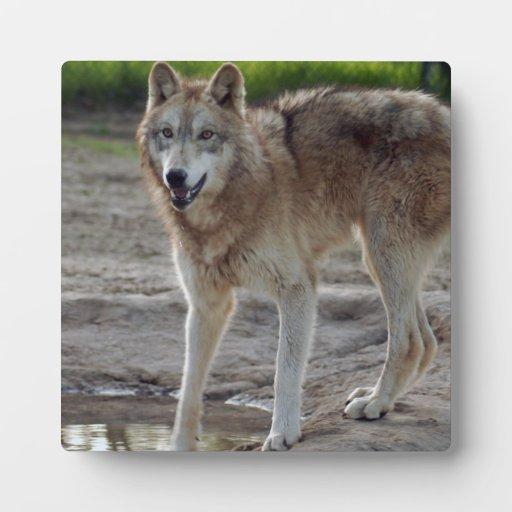 grey-wolf-10 placas con foto