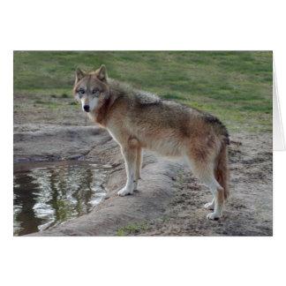 grey-wolf-11 card