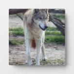 grey-wolf-13 placa para mostrar