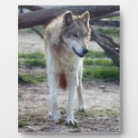 grey-wolf-13 placas de madera