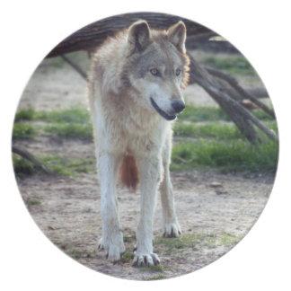 grey-wolf-13 plato