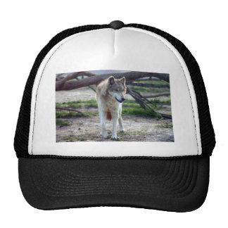 grey-wolf-13 trucker hat