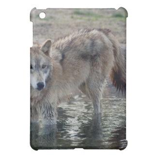 grey-wolf-14
