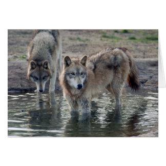 grey-wolf-14 card