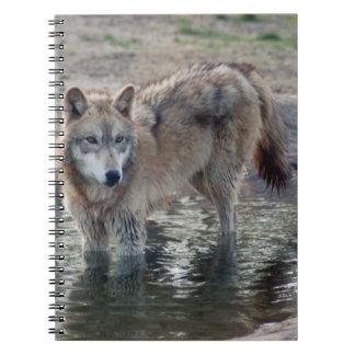 grey-wolf-14 cuaderno