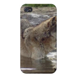 grey-wolf-16 iPhone 4 coberturas