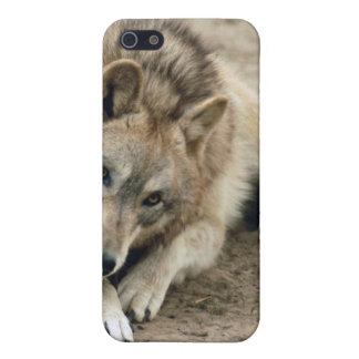 grey-wolf-17 iPhone 5 cobertura