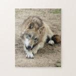 grey-wolf-17 puzzles con fotos