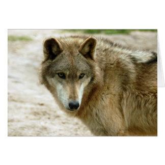 grey-wolf-19 card