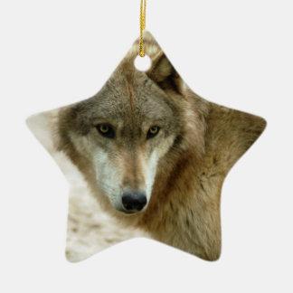 grey-wolf-19 ornato