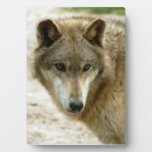 grey-wolf-19 placas de madera