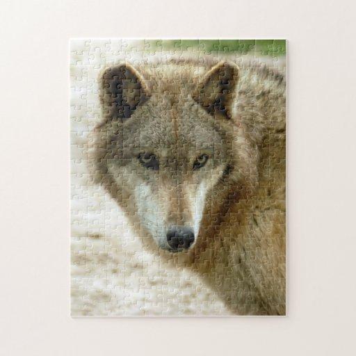 grey-wolf-19 rompecabezas con fotos