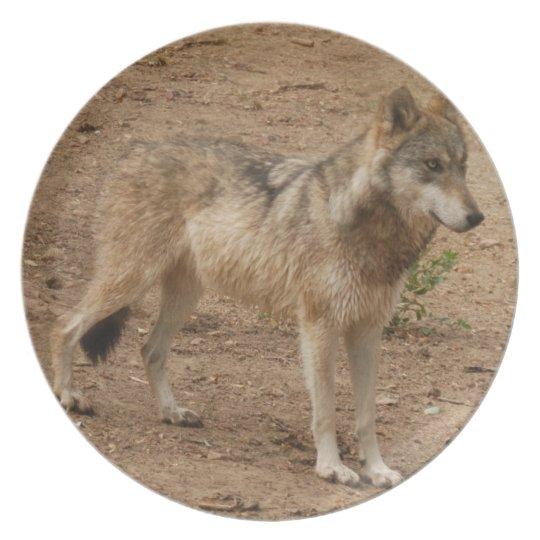 grey-wolf-1 melamine plate