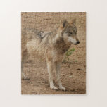 grey-wolf-1 puzzles