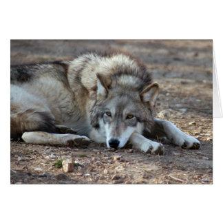 grey-wolf-20 card
