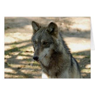 grey-wolf-21 card