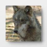 grey-wolf-21 placas con fotos