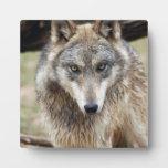 grey-wolf-3 placas con foto