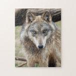 grey-wolf-3 rompecabezas