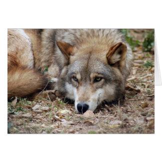 grey-wolf-4 card