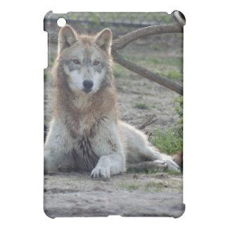 grey-wolf-5