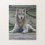 grey-wolf-5 puzzle con fotos
