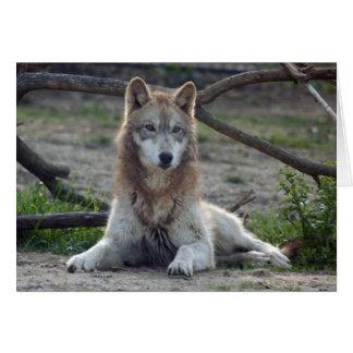 grey-wolf-6 card