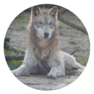 grey-wolf-6 plato de cena