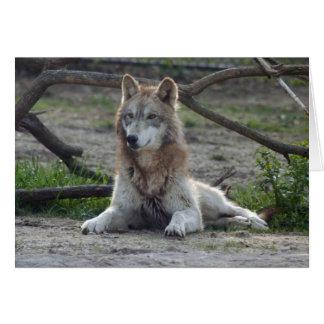 grey-wolf-7 card