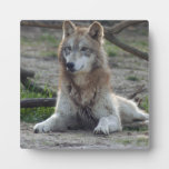 grey-wolf-7 placas de plastico