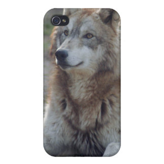 grey-wolf-8 iPhone 4/4S funda