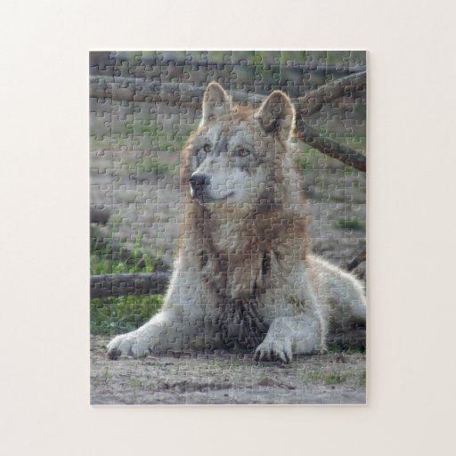 grey-wolf-8 jigsaw puzzle