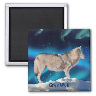 Grey Wolf & Aurora Wildlife Collection 2 Inch Square Magnet