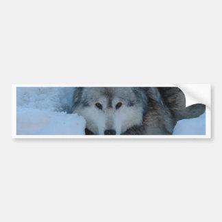 Grey wolf car bumper sticker