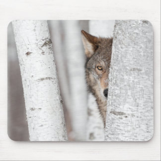 Grey Wolf (Canis lupus) Behind Tree Mouse Pad