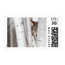 Grey Wolf (Canis lupus) Behind Tree Postage