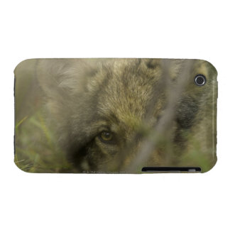 Grey wolf (Canis lupus) pup alone, hiding in iPhone 3 Cover