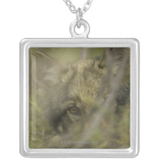 Grey wolf (Canis lupus) pup alone, hiding in Silver Plated Necklace