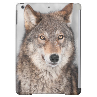 Grey Wolf (Canis lupus) With One Ear Back Cover For iPad Air
