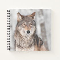 Grey Wolf (Canis lupus) With One Ear Back Notebook