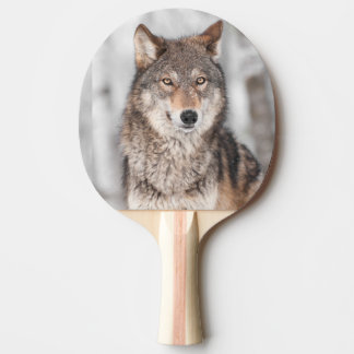 Grey Wolf (Canis lupus) With One Ear Back Ping-Pong Paddle